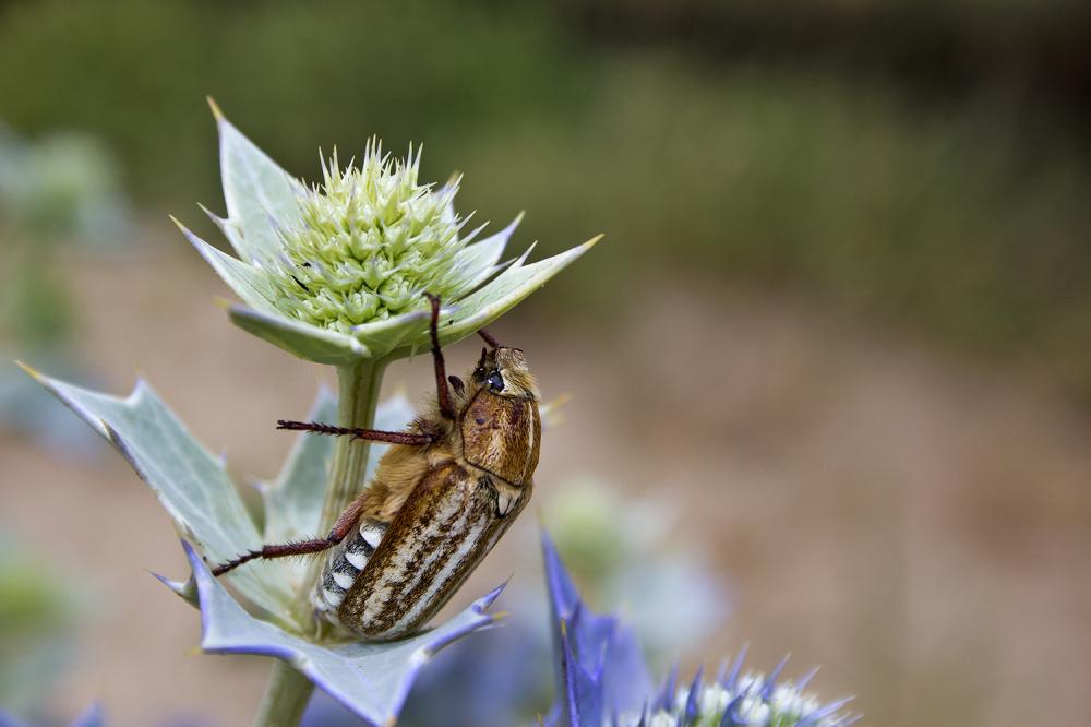 insecto s-martinho-do-porto
