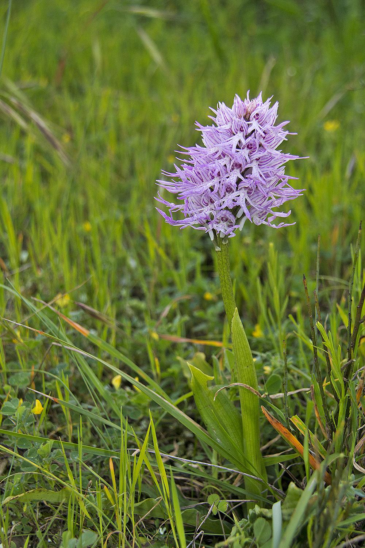 flor orquídea