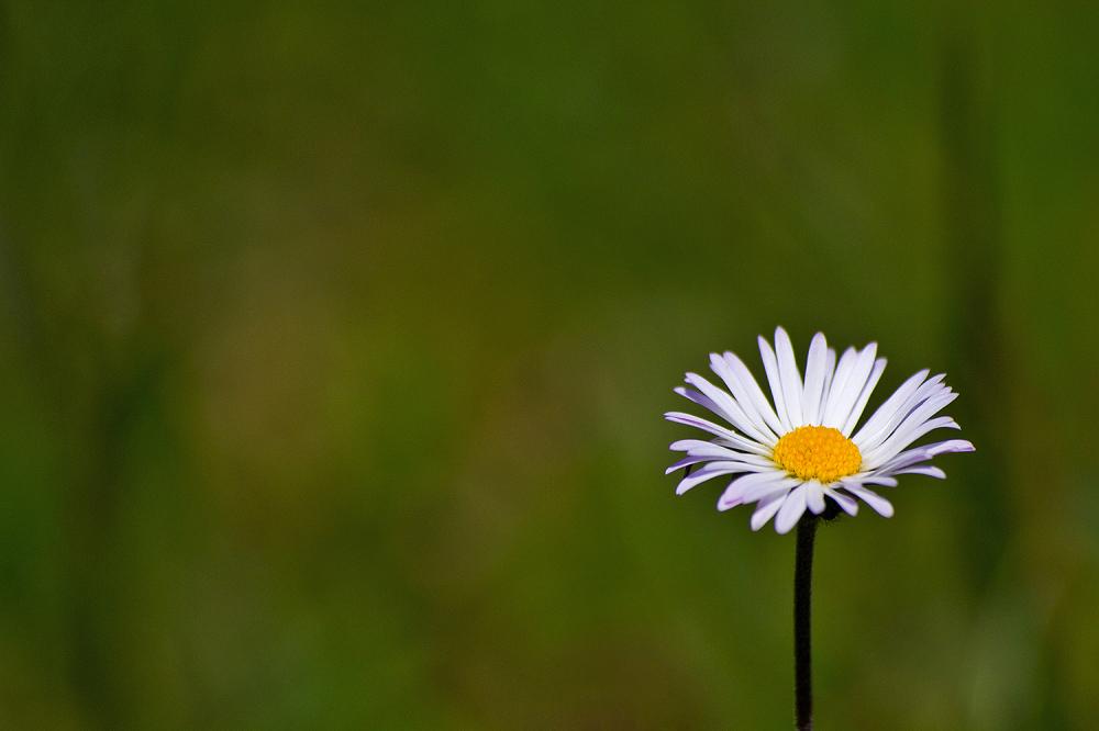 flor pnsac