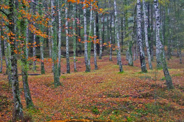 peneda-gerês outono arvore mata-da-albergaria