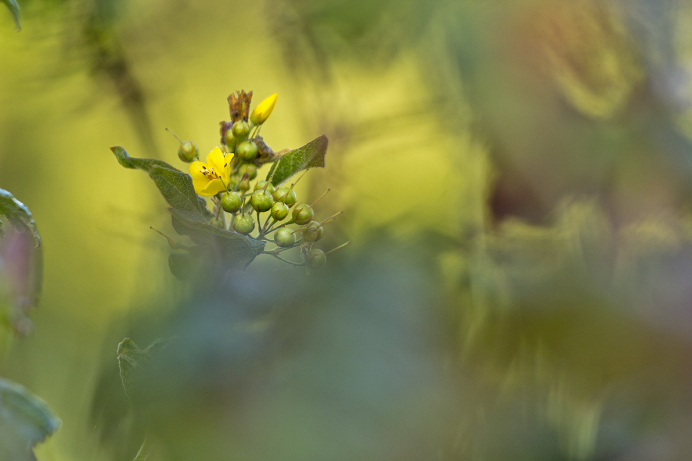 flor aveiro