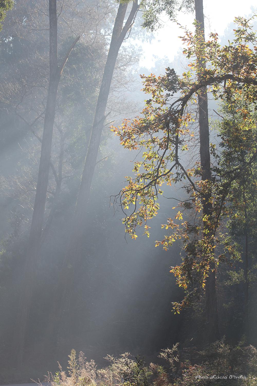 s.pedrodemoel sunrise nevoeiro