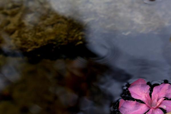 marrocos rio flor Rio-Akchour