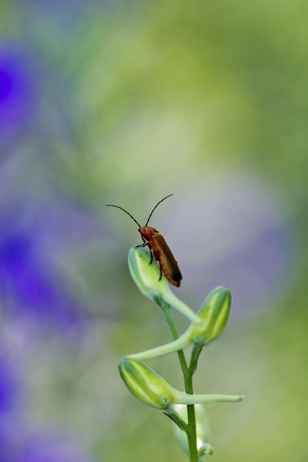 coimbra flor insecto coleoptera