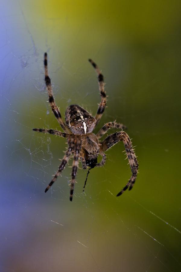 coimbra flor insecto aranha