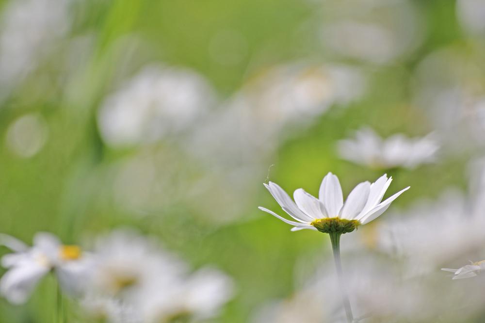flor aveiro pateira-de-fermentelos