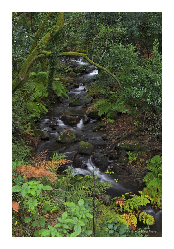 serra sicó cascata outono