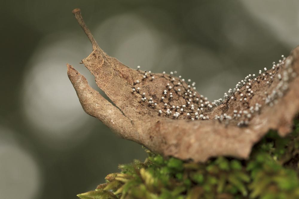 sicó outono líquen folhas