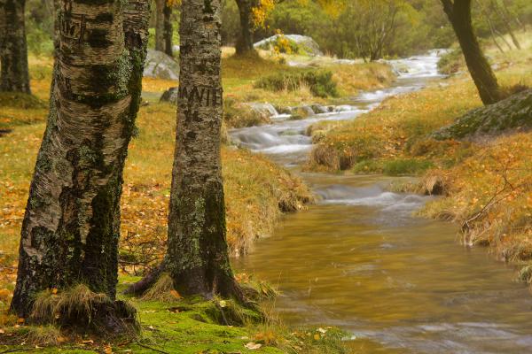 serraestrela covão-da-ametade outono nevoeiro