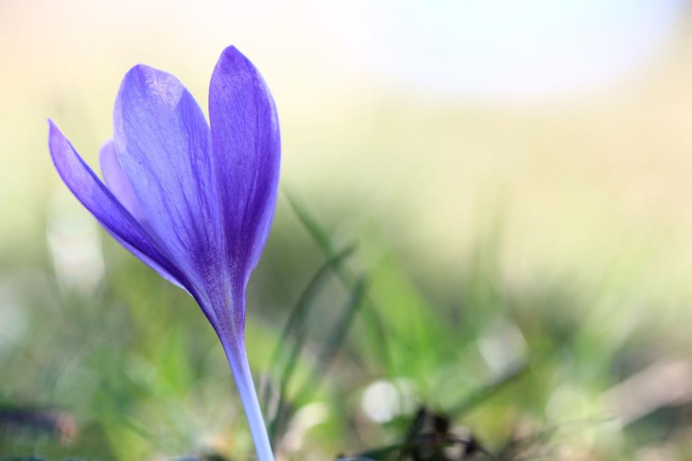 lousã outono açafrão santoantóniodaneve flor