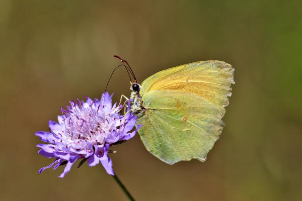 flor borboleta pnsac
