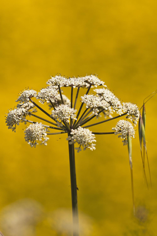 aveiro ria-de-aveiro salina salreu bioria flor