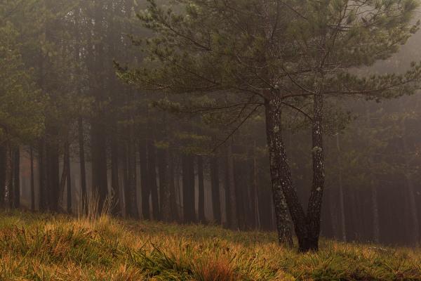 lousã inverno arvore nevoeiro