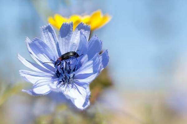 flor insecto primavera peniche