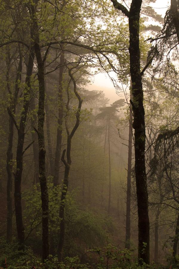lousã primavera arvore nevoeiro