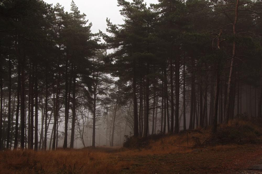 lousã outono nevoeiro