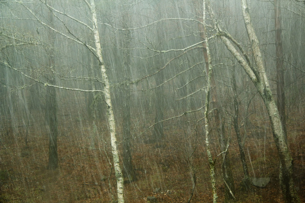 lousã primavera nevoeiro arvore neve chuva