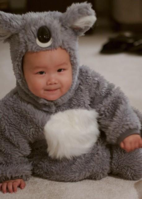 koala bear costume