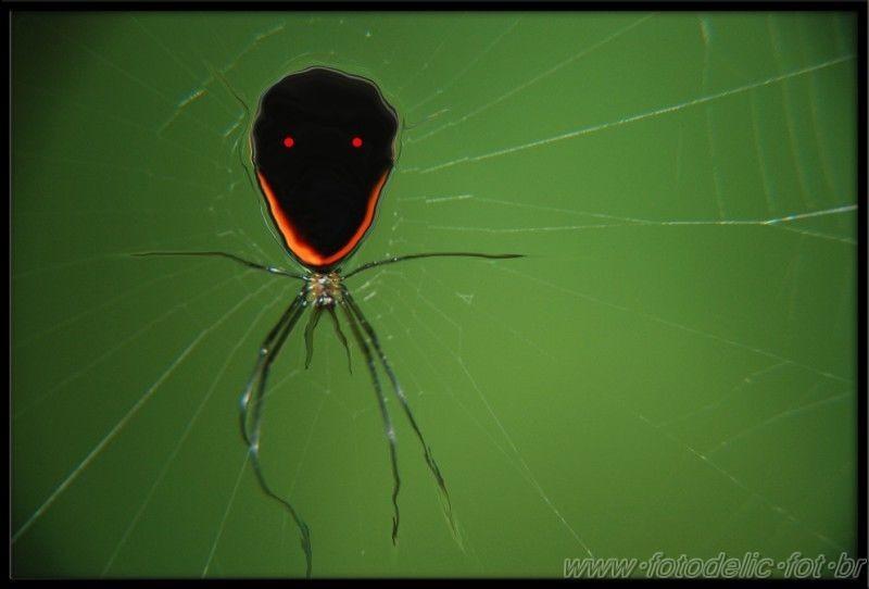 a spider