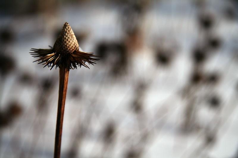 Fleur d'hiver - Winter flower