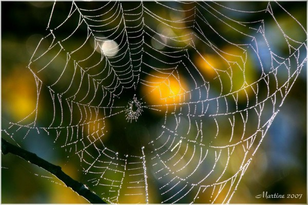 The morning web - La toile du matin