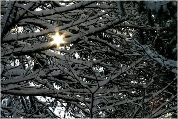 Snow and sun - Neige et soleil