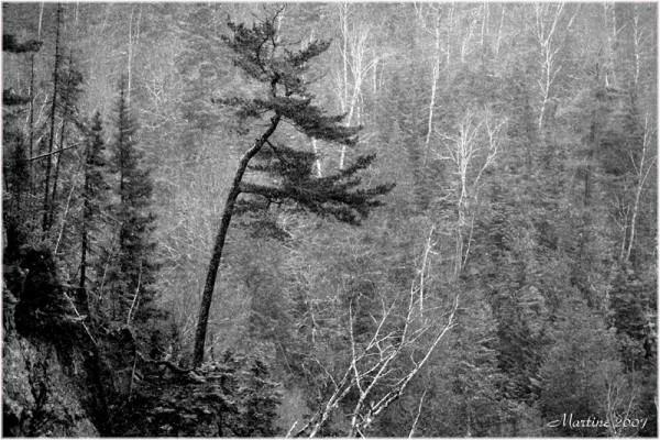 Accroché au roc - Rock's hanged