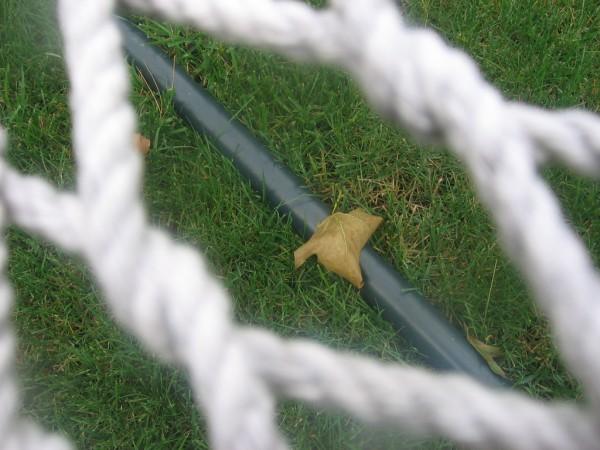 little leaf; big world