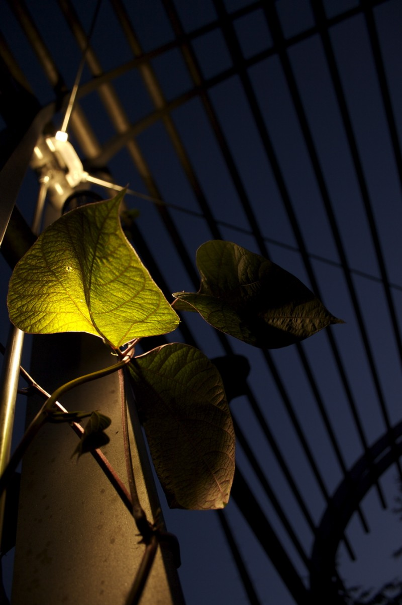 Wired Leaves