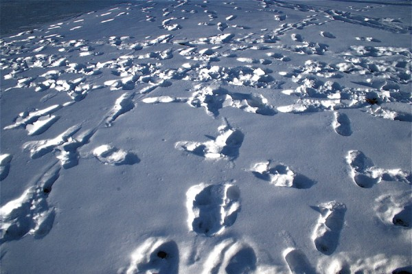 Snow Tracks in the Snow