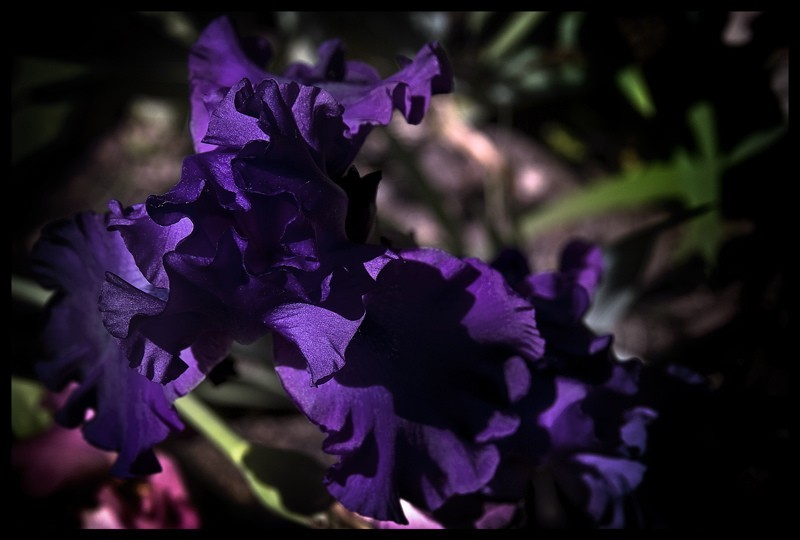 Final flower