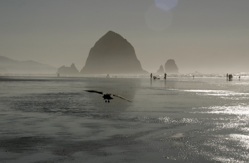 Cannon Beach, Oregon #5