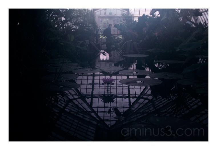 Greenhouse Gothic