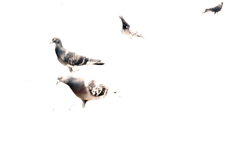 Avian Exposure