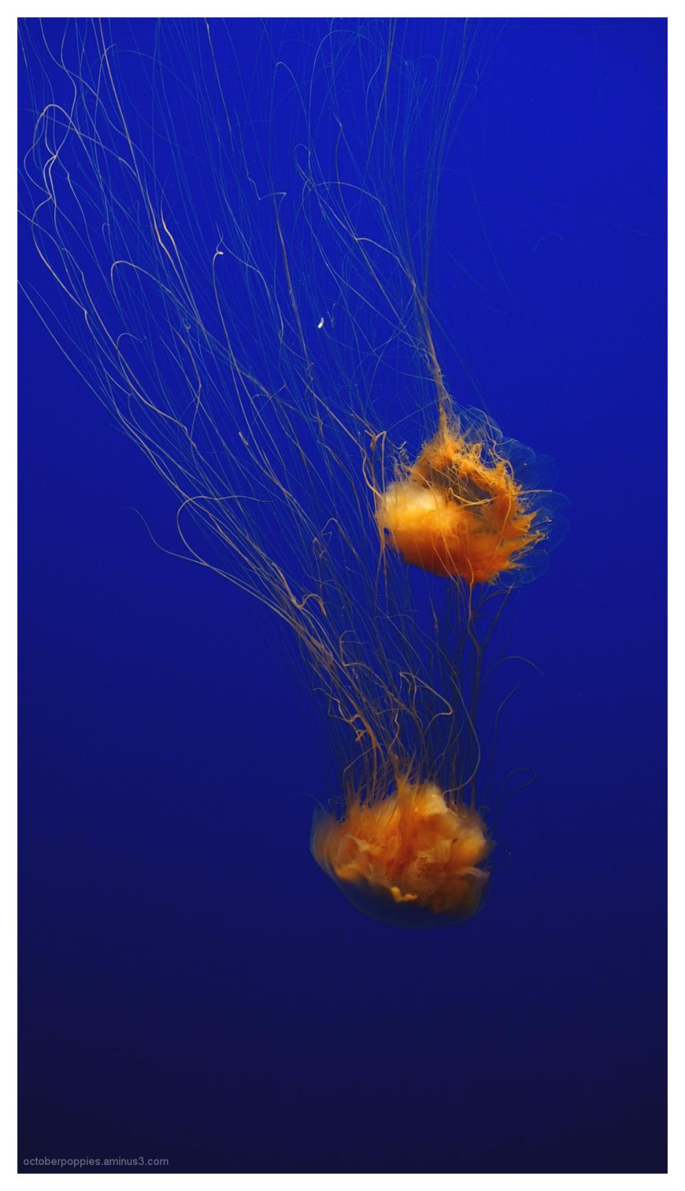 Monterey Jellies, 2
