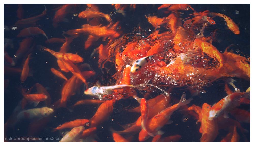 Fishconography, 4