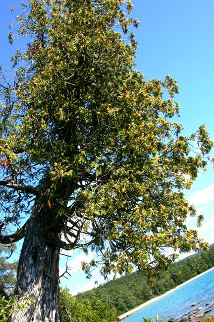 The Tree ...