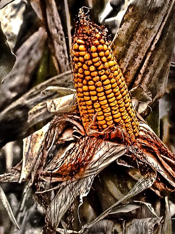 Corny Processing