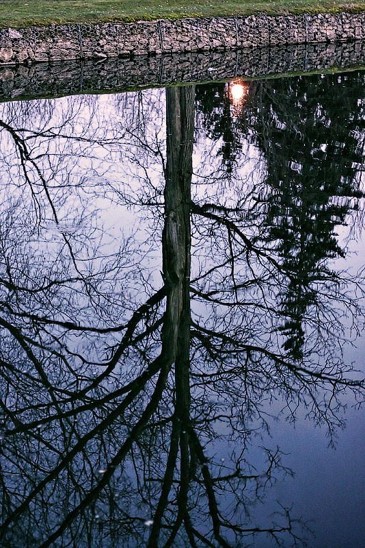 Reflections of Tree in Water