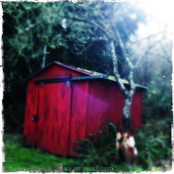 a red work shed in a backyard