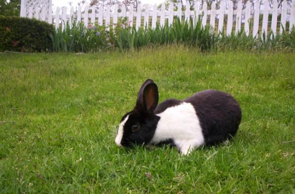 My friend Pete's bunny