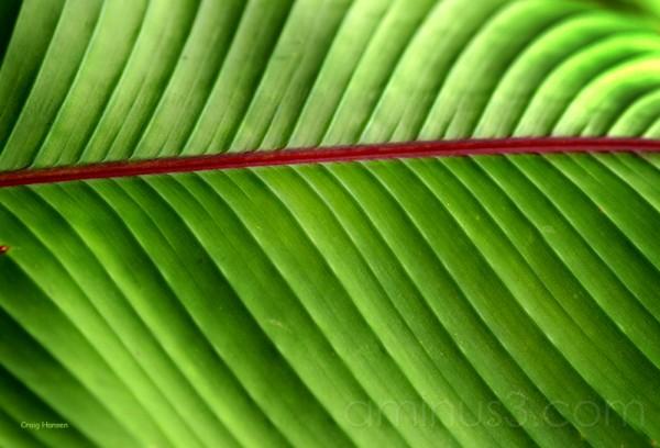 Costa Rica Rain Forest - 2006