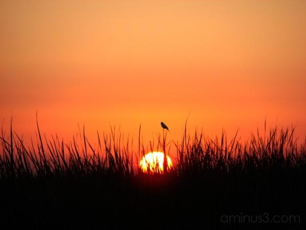 Sunrise at the Yolo Bypass Wildlife Refuge III