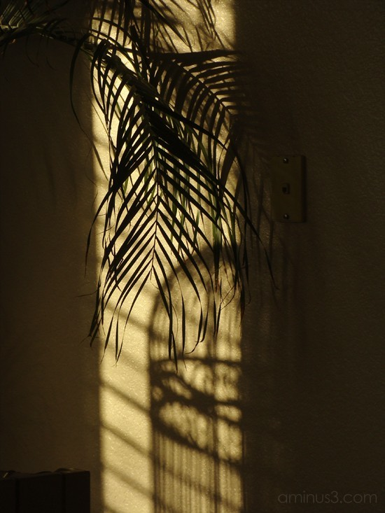 Palm w/birdcage shadow