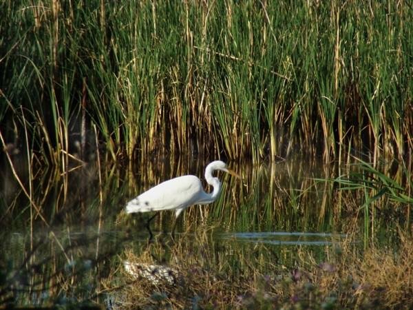 The Marsh II