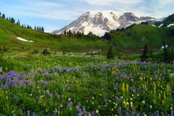 Mount Rainier V