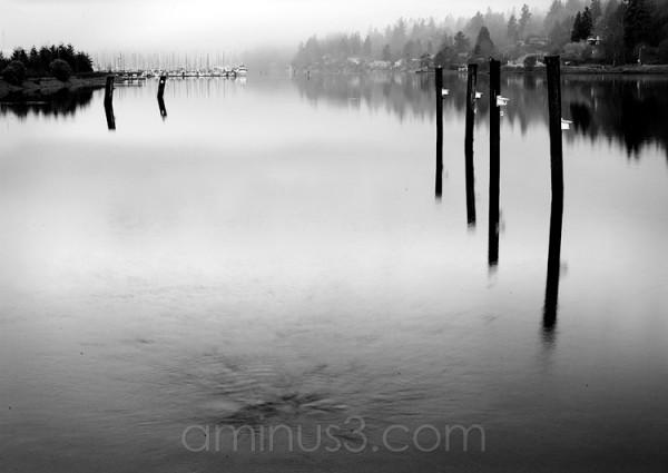Bay in the fog