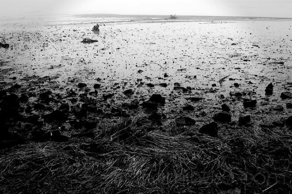 Oyster Bay Estuary