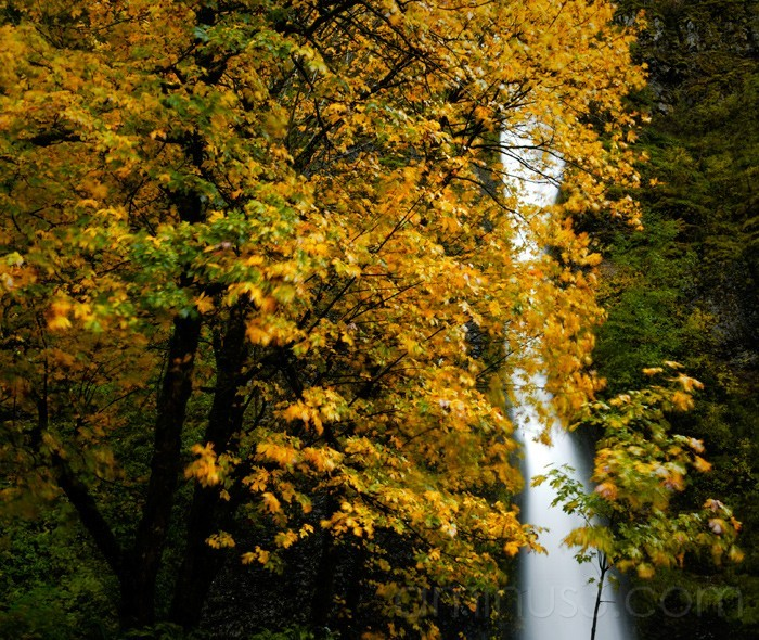 Falls & Trees