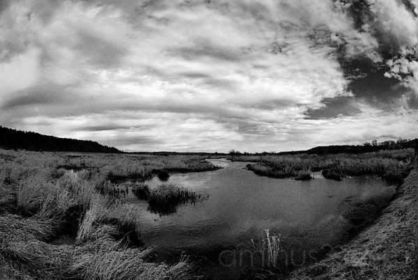 Windswept Wetland